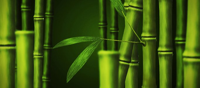 Draw a Nice Bamboo Artwork using Photoshop