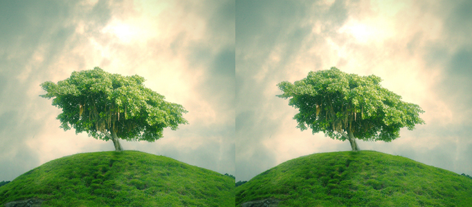 Photo Combination – Green Tree under Cloudy Sky