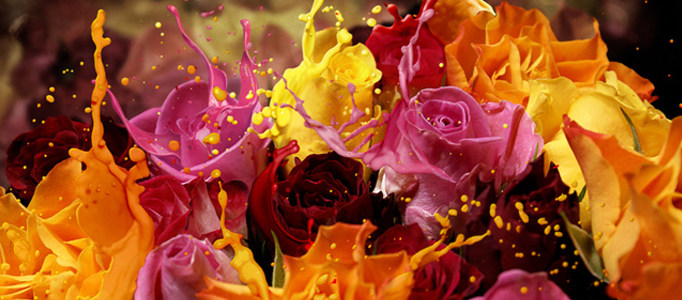 Apply Liquefied Effect to Colorful Flowers