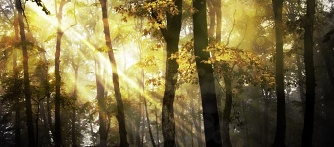 Photoshop to Create a Fantasy Forest Scene