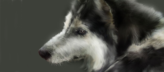 Making a Nice Dog Portrait