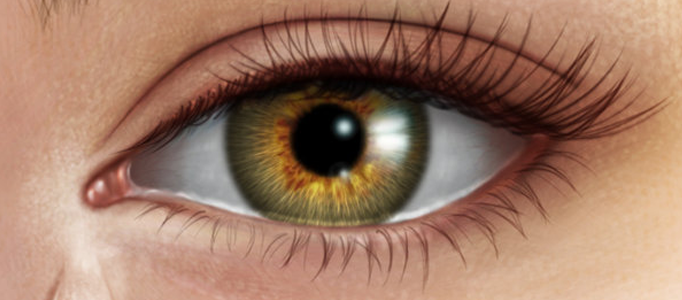 Human Eye Creation using Photoshop