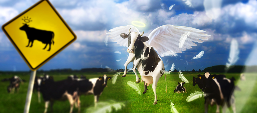 Photo Manipulating a Simple Flying Cow Scene